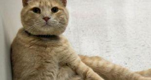 Il gatto Tom conforta i malati terminali