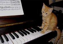 Musica-da-pianoforte-solo-per-gatti-la-nuova-scoperta