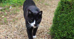 Perche il gatto scappa di casa, come ritrovarlo