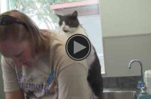 Il gatto che massaggia la padrona