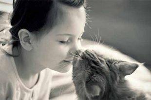 Si possono baciare sulla bocca i cani e i gatti la ricerca