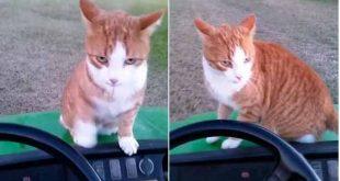 Uccide un gatto e posta la foto su Facebook