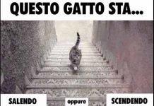 gatto-sale-o-scende-le-scale