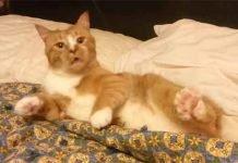 Attacco di starnuti anche il vostro gatto reagisce cosi