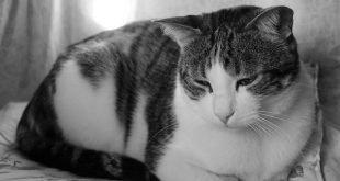 Gatti che salvano la vita, il caso di Josh Marino