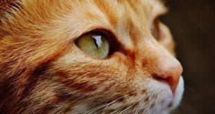 Museo sui gatti apre in North Carolina, biglietto di ingresso ad offerta libera