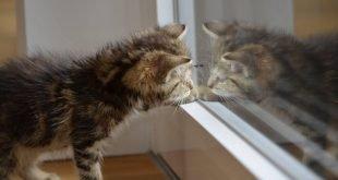 Puntatore laser intelligente per far giocare i gatti, ecco Felik su Kickstarter