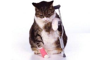 assicurazione gatto
