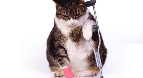 Assicurazione gatto consigli quanto costa e cosa copre - Assicurazione casalinghe inail cosa copre ...