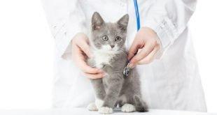 castrazione e sterilizzazione gatto pro e contro