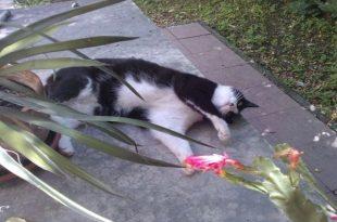 gatti emergenza caldo estivo
