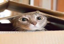 gatti scatole rettangoli