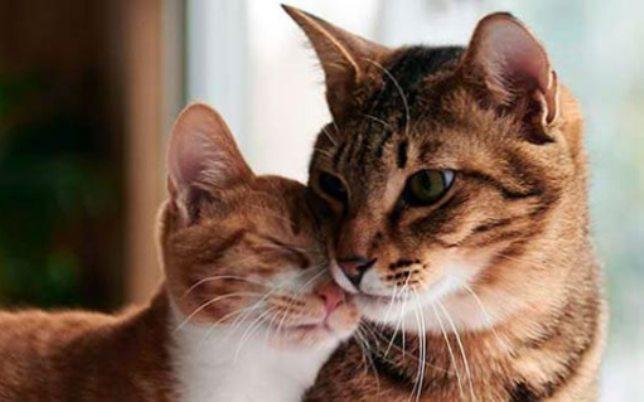 Differenze Gatto Maschio E Femmina Come Riconoscerli Mondo Gatti