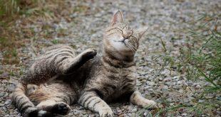 Antiparassitari gatti e gattini, tutti i rimedi contro pulci e zecche