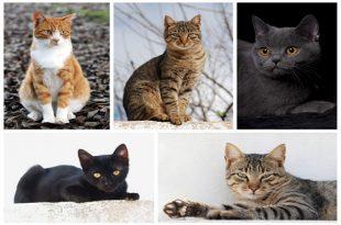 adottare o comprare gatto