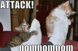 attacco caviglie gatto