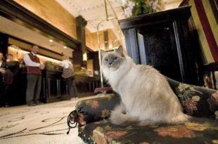 foto gatti perfette