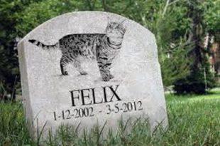 funerale gatto