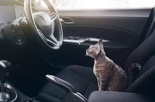 gatto estate viaggio auto