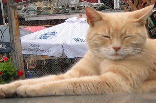 gatto stubbs