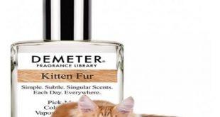 Kitten Fur, il profumo che sa di gatto