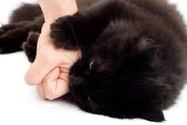 Donna Morta Dopo Morso Di Un Gatto Scoperta La Causa Del Decesso
