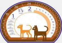 età gatto-uomo