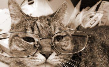 gatto anziano invecchiamento