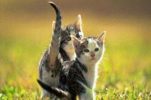 gatto aria aperta giardino