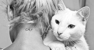 gatto-umano