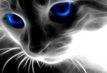 sesto senso gatti