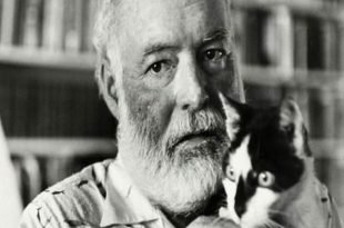 Uragano Irma salvi gatti Hemingway