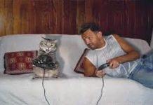 gatti domestici imitano padrone studio