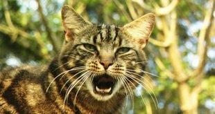 Il vostro gatto fa le fusa ecco il perch fotogallery mondo gatti il blog a quattro zampe - Come fare il bagno al gatto ...