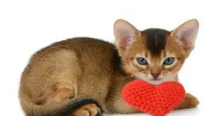 Come rendere felice il proprio gatto di casa senza fatica