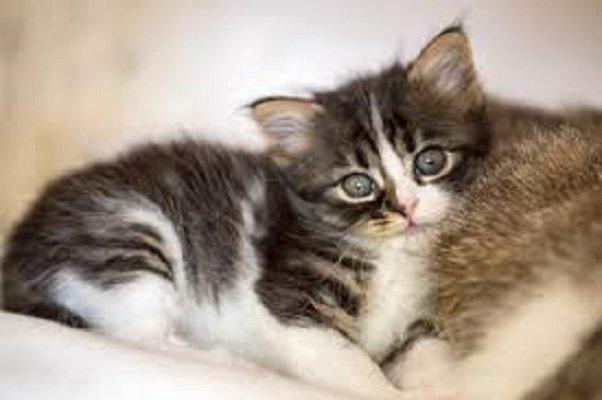 Tenia Nel Gatto Come Capire Se Ne è è Infestato Mondo Gatti