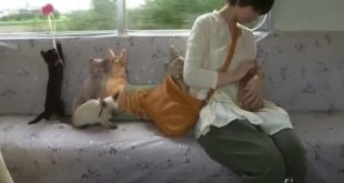 treno dei gatti Giappone