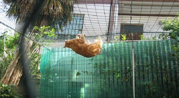 gatti in sicurezza recinto terrazzo e giardino