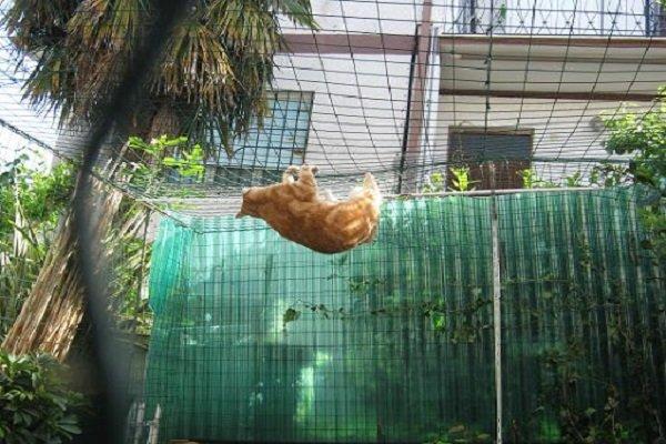 Gatti in sicurezza come rendere terrazzo e giardino anti caduta e anti fuga mondo gatti il - Sicurezza finestre fai da te ...
