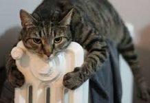 Accensione riscaldamento 2017, come curare i gatti in inverno