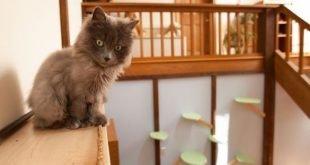 Come trasformare la casa a misura di gatto