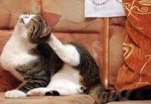 Gatti, allarme pulci e zecche anche in inverno