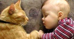 Gatti e neonati, addio asma e allergie respiratorie nell'infanzia
