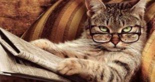 Giappone, gatto accusato di omicidio