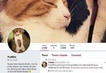 Nuova Zelanda in lutto, First Cat Paddles muore investito da un auto