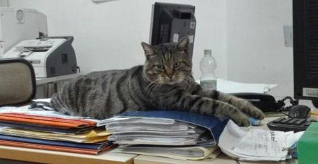 Romeo il gatto, la storia della mascotte dell'ospedale di Sanremo