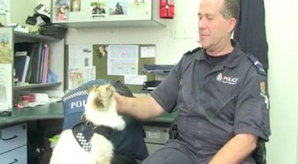 Tia gatta poliziotta Nuova Zelanda