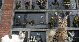 gatti morti sepolti tomba famiglia proposta Aidaa come e quanto costa seppellire gatto dopo morte