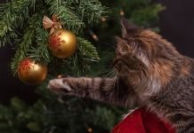 Natale a prova di gatto, regole di sicurezza