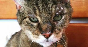 Gatto smarrito da 10 anni e ritrovato dopo gli incendi della California